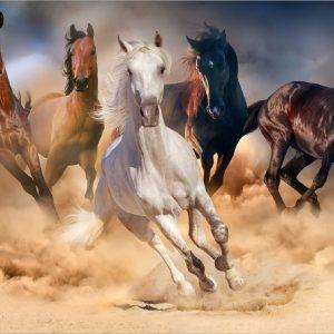 Horses - 3x5'