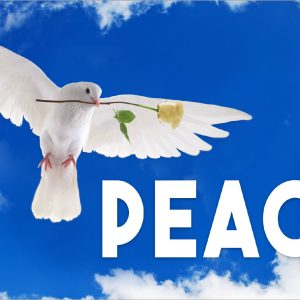 Peace Dove - 3x5'