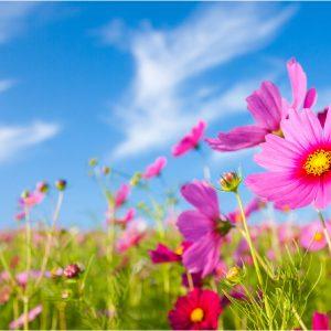 Spring Flowers - 3x5'